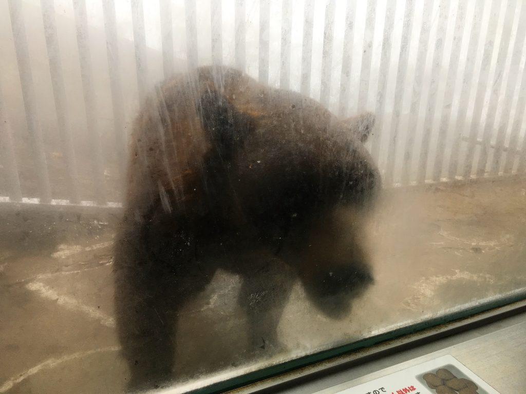 ヒトのオリのクマ