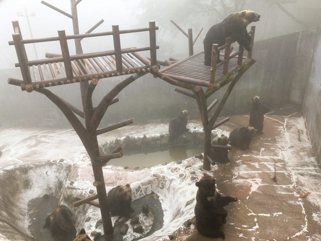 第2牧場のメスグマ