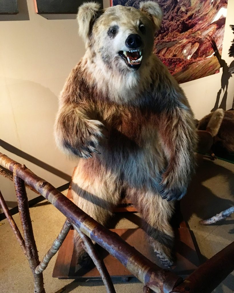 白い毛のクマの剥製