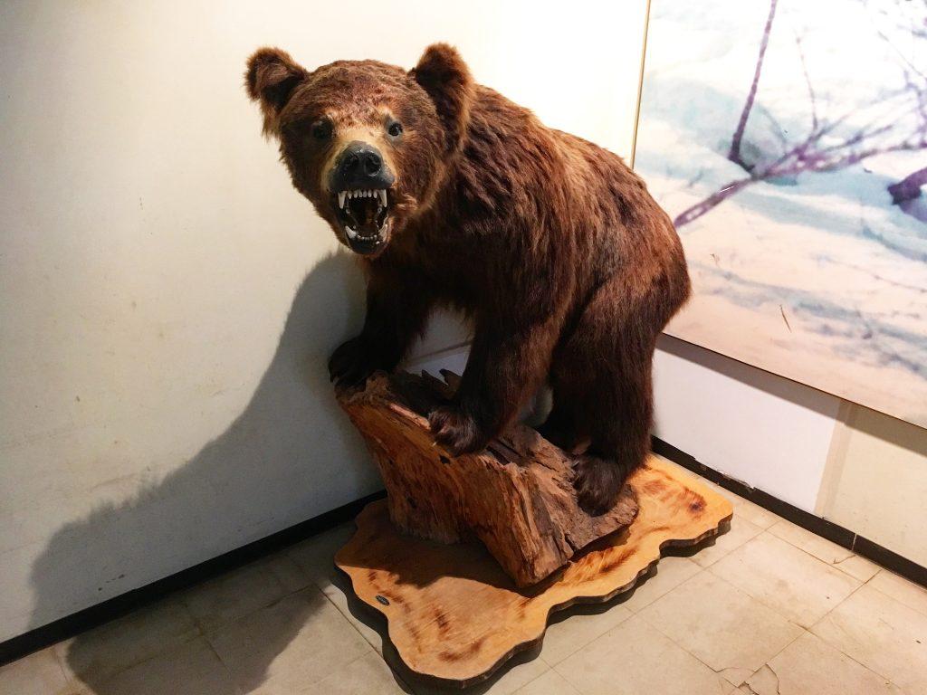威嚇しているクマの剥製