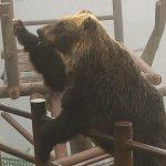 【北海道観光】あのCMでおなじみ『のぼりべつクマ牧場』は個性豊かなクマがいっぱい!