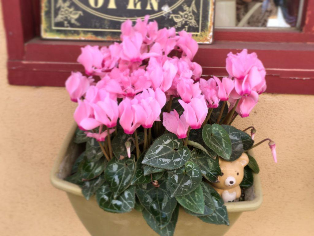 くまもり食堂の花