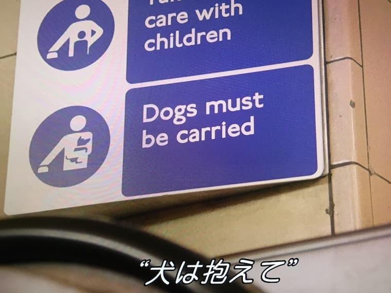 犬は抱えて