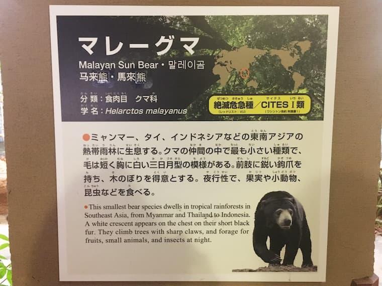 マレーグマの説明