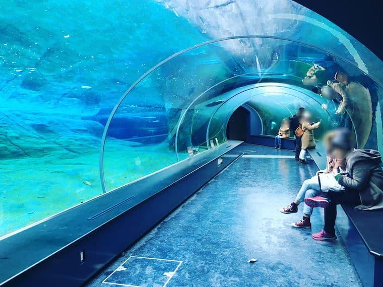 ホッキョクグマ館の水中トンネル