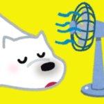【熱中症予防】デスクや外出先で大活躍!くまの扇風機&ハンディファン12選